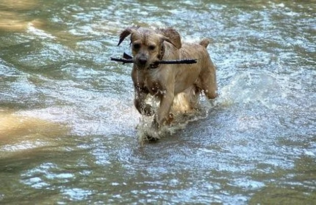 Dogs_In_Water_11