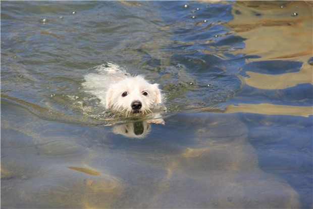 Dogs_In_Water_2
