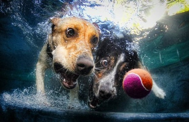 Dogs_In_Water_4