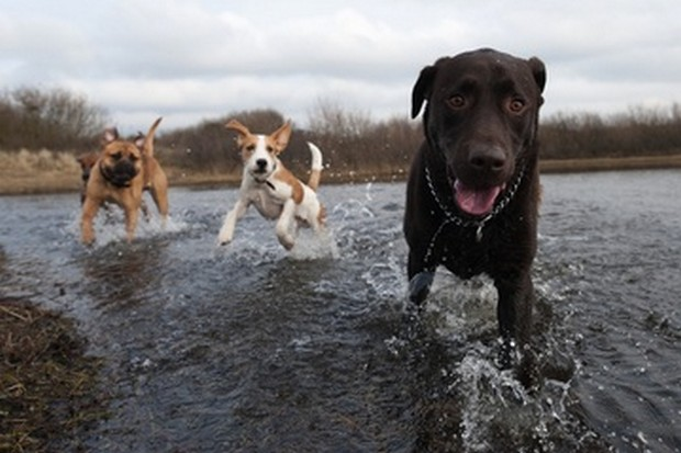 Dogs_In_Water_7