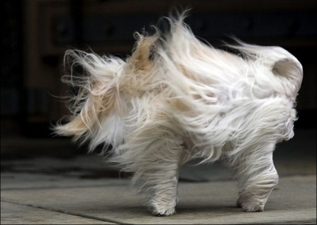 Dogs_In_Wind_3