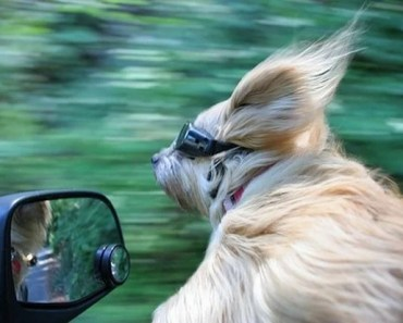 Awesome Pictures of Dogs in the Wind