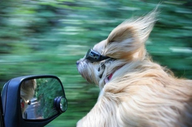 Dogs_In_Wind_9