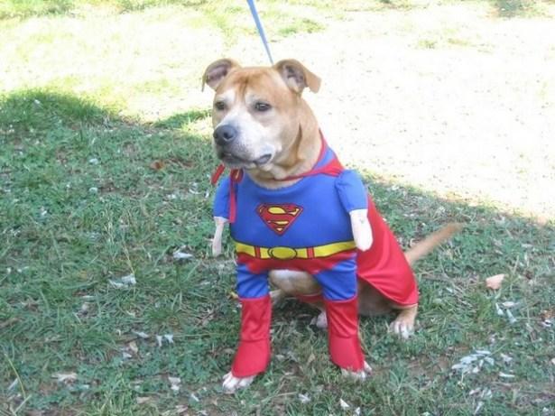 Superdog_8