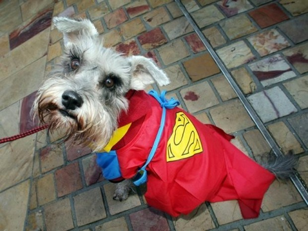 Superdog_9