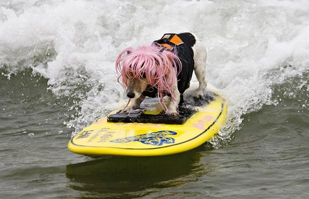 Surfing_Dogs_3