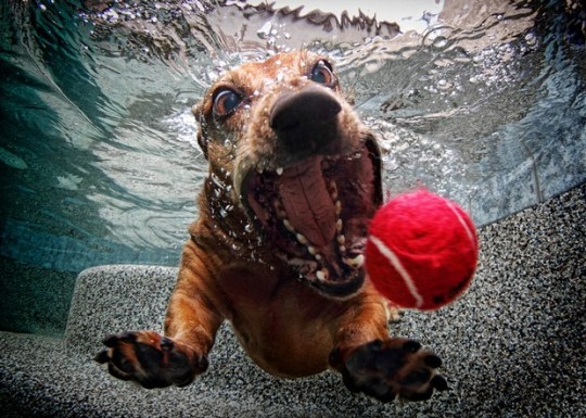 Underwater_Dog_11