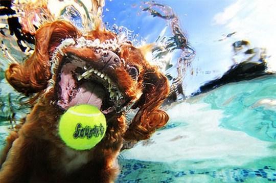 Underwater_Dog_2