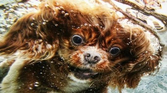 Underwater_Dog_8