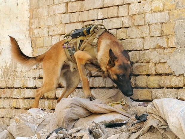 combat_dogs_3