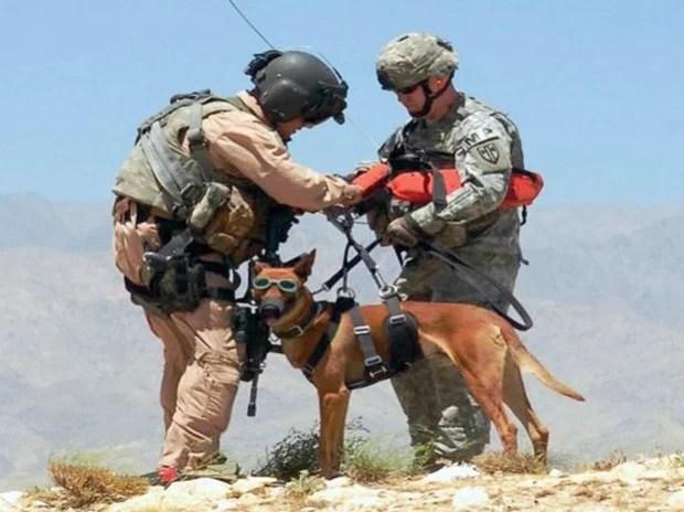 combat_dogs_7