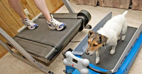 dog-exercise-treadmill