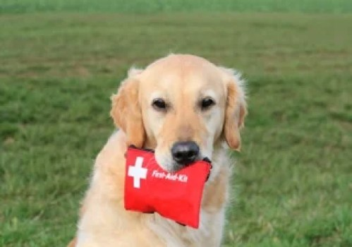 dog-first-aid-kit-dog-holding-first-aid-kit
