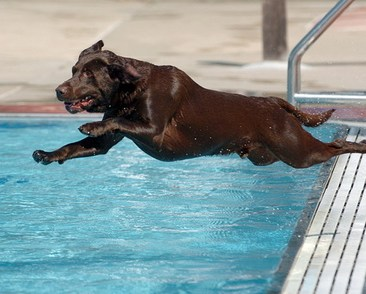 A Collection of Hot Weather Tips for Your Dog