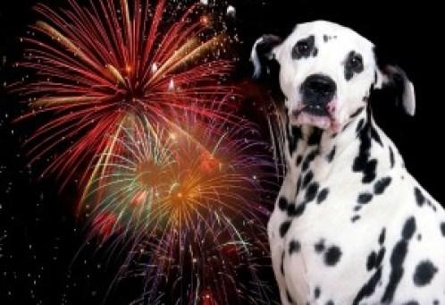 fireworks_dog