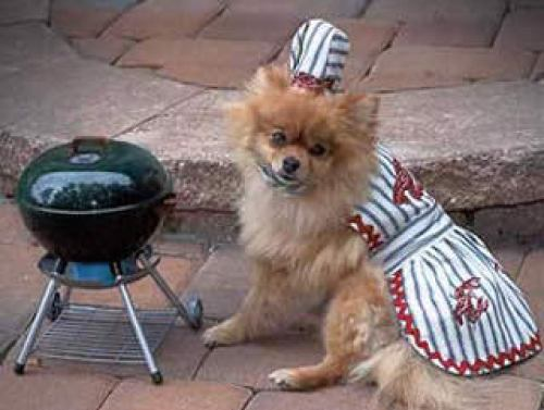 max_400_halloween-dog-costume-barbecue-chef