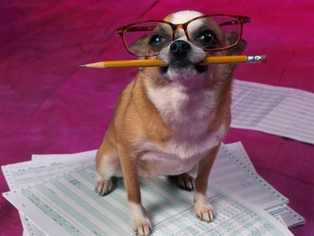 smart_dog_1