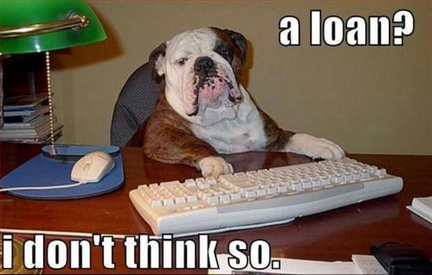 smart_dog_9