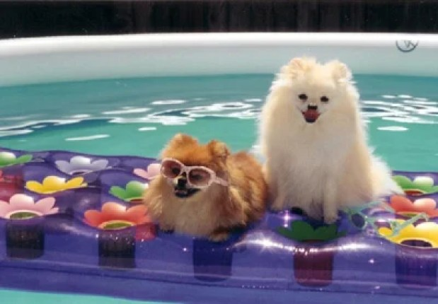 summer-pet-care-tips