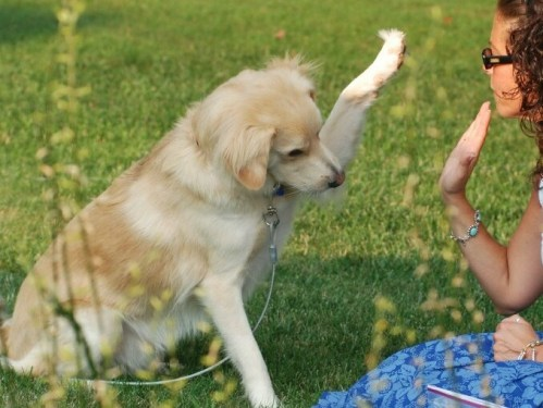 201322726419_Training-Dog4_0_90_678_510