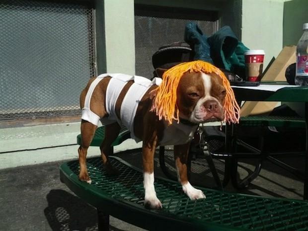 Dog_Cosplay_10