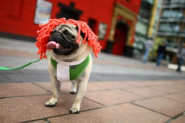 Owners Enter Their Dogs In To The Sci-fi Dogs Parade