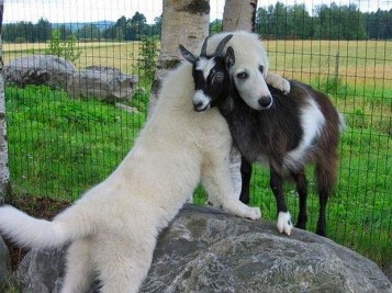 Many of us dog owners already know how affectionate our canines can be. But it's even better when you can catch this on camera. Whether it's a human being, another dog, a cat, or any other animal, somehow dogs find their ways into our hearts. We hope you enjoy this gallery of hugging dogs.