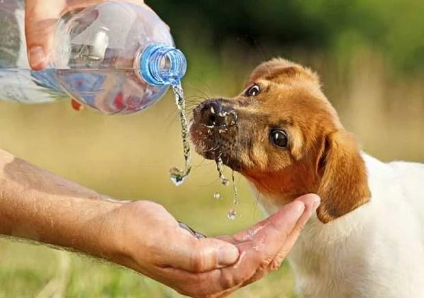 Puppy_Drinking_3