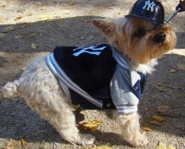 A Gallery of Dogs Who are Baseball Fans