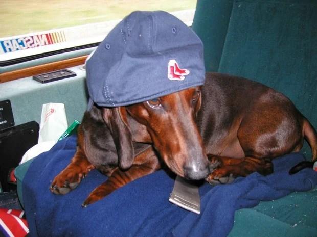 baseball_dogs_5