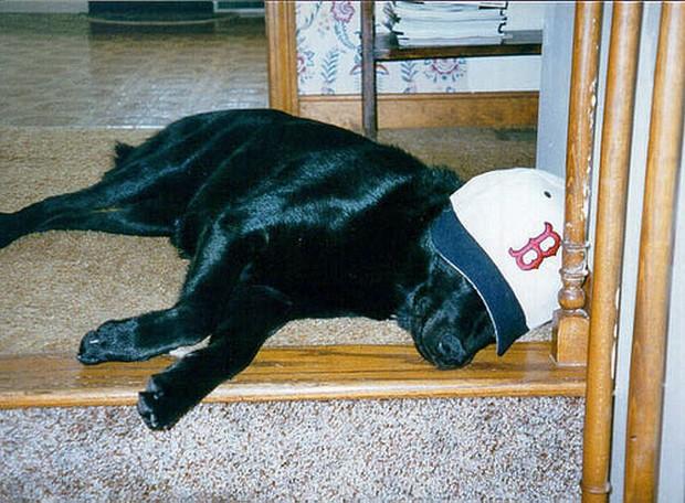 baseball_dogs_6