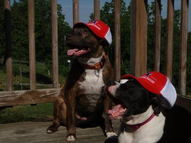 baseball_dogs_7
