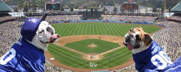 baseball_dogs_8