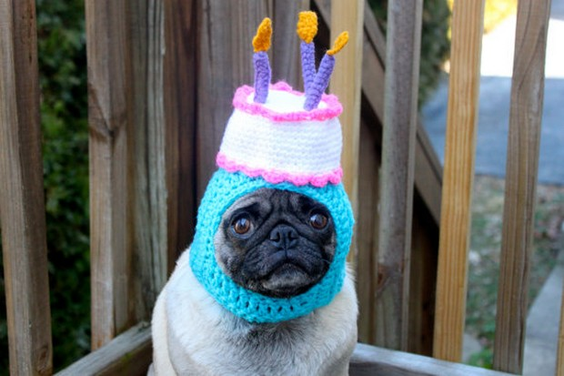 dogs_in_hats_11