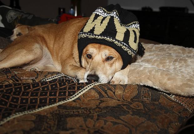 Red Heeler Dog Wearing Hat