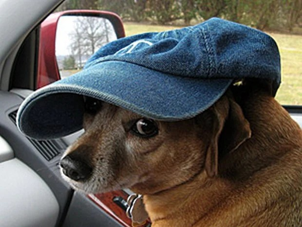 dogs_in_hats_9