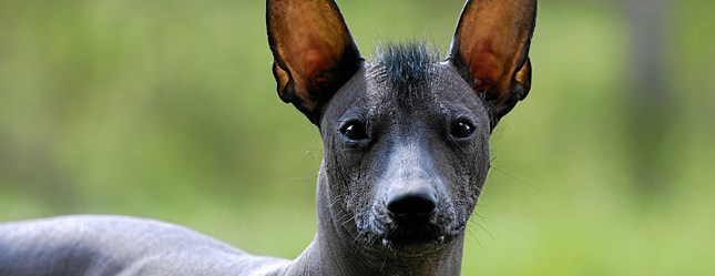 10 of Your Stranger Looking Dog Breeds