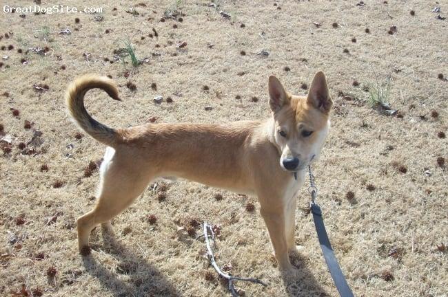 Carolina Dog-watermarked-1235436722