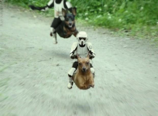 Dog_Photoshop_4