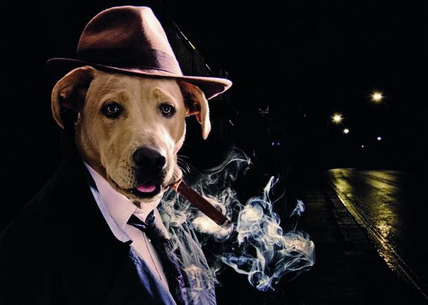 Dog_Photoshop_5
