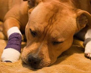 Seven Home Remedies if Your Dog is Sick