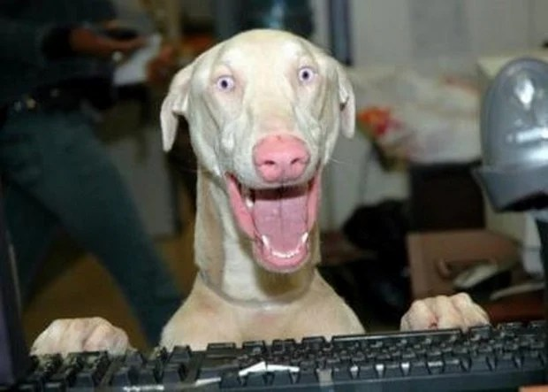 excited_dog_1