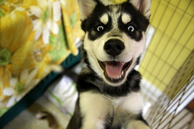 excited_dog_6