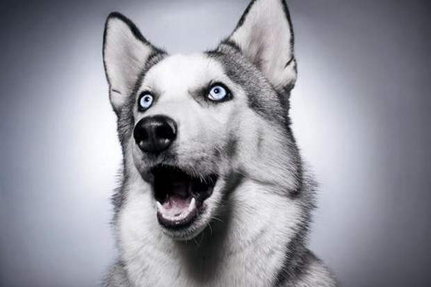 excited_dog_7