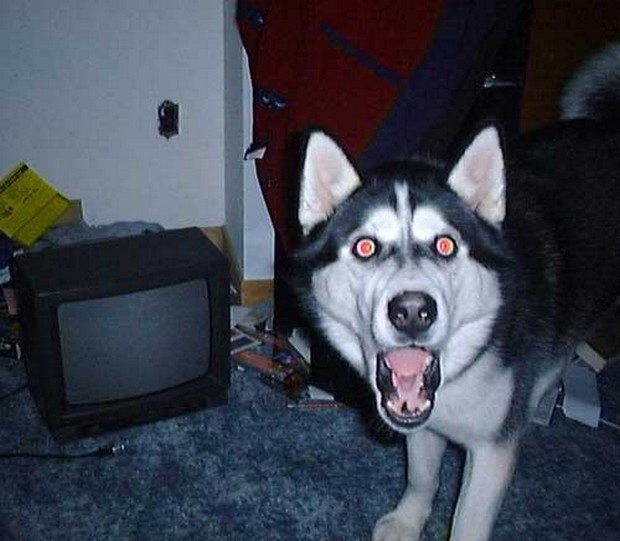 excited_dog_8