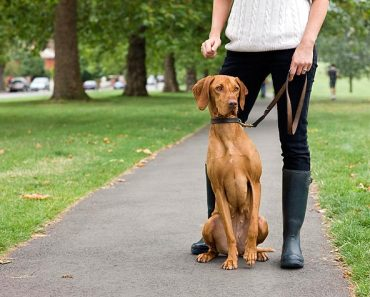 Tips on Finding the Right Dog Sitter