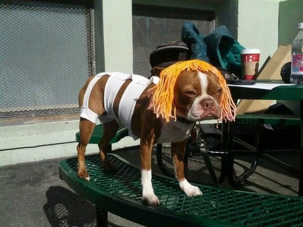 Dog_Cosplay_4