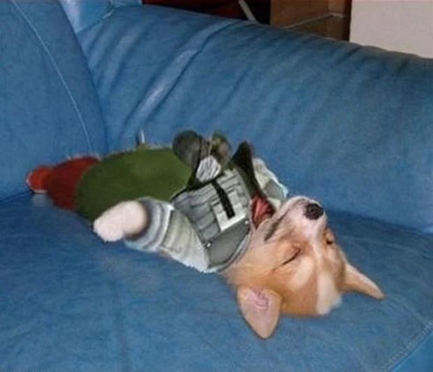 Dog_Cosplay_8