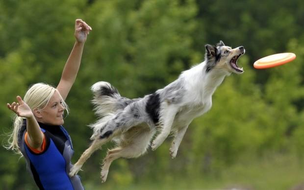 Frisbee_Dog_3