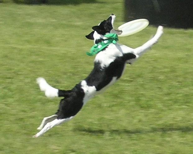 Frisbee_Dog_7